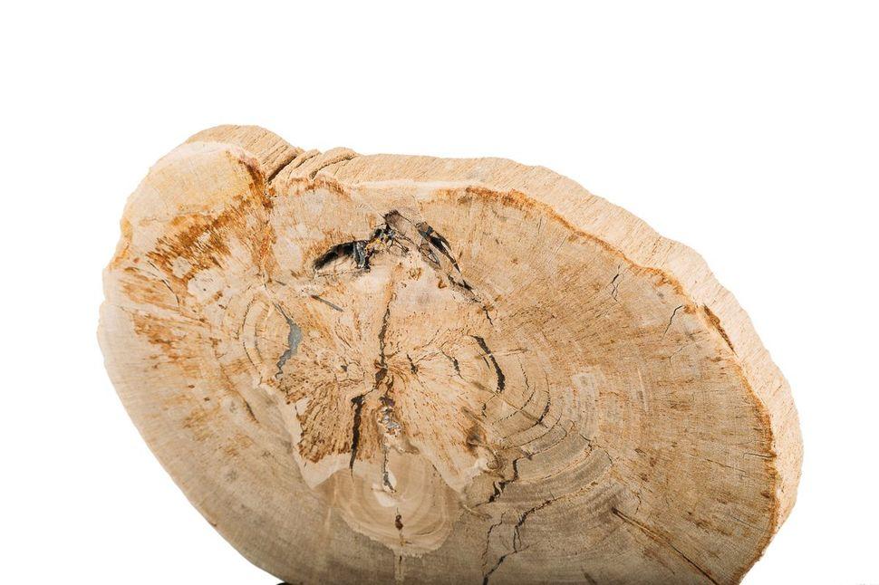Панно из окаменелого дерева Karacal 2