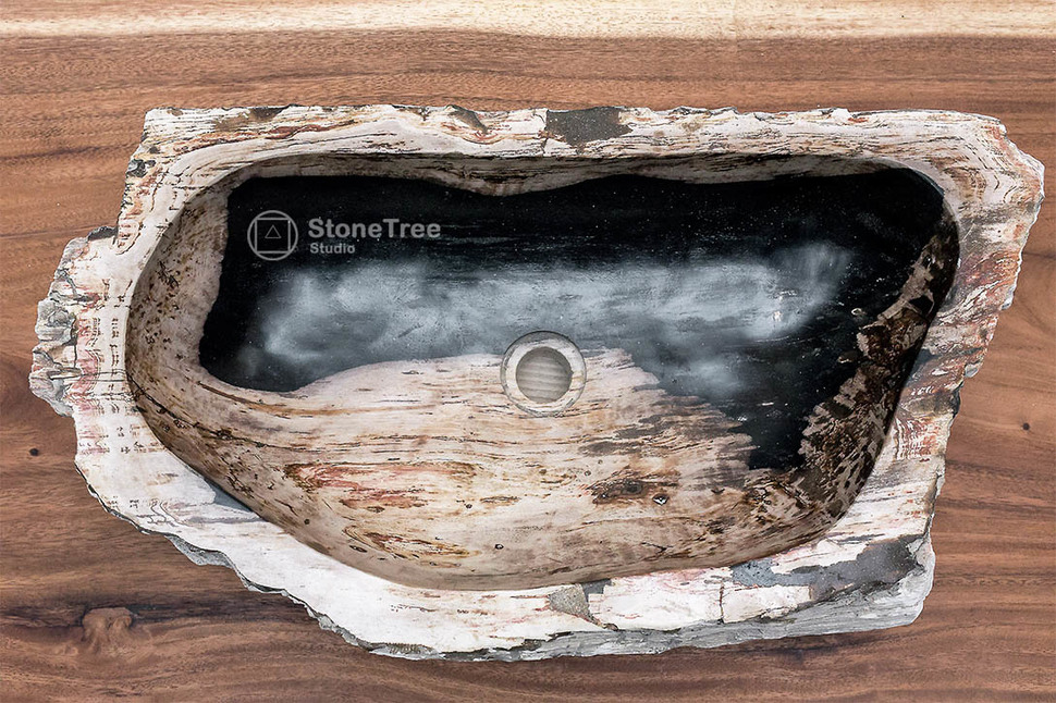 Раковина из окаменелого дерева Panthera 4