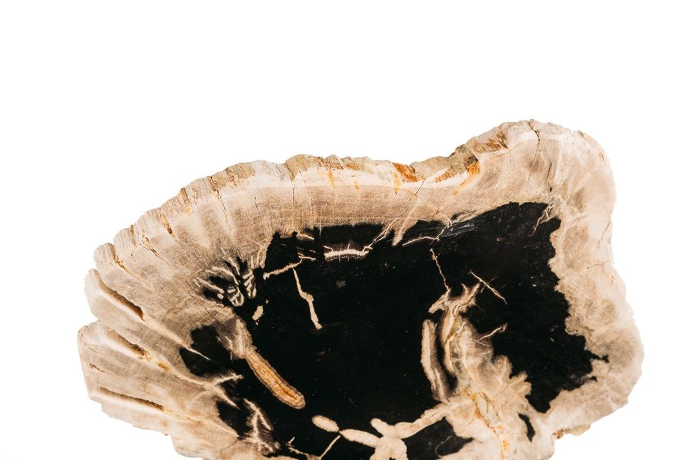 Панно из окаменелого дерева Panthera 1