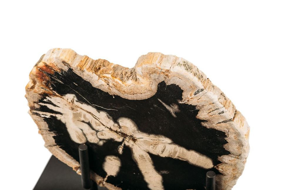 Панно из окаменелого дерева Panthera 3