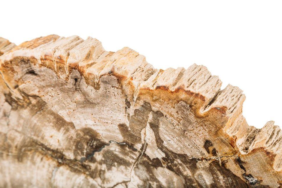 Панно из окаменелого дерева Karacal 1