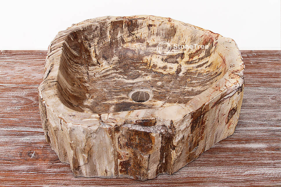 Раковина из окаменелого дерева Gold Tiger