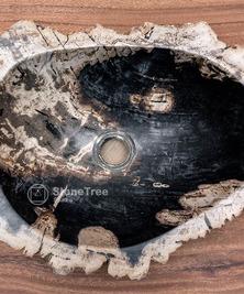 Раковина из окаменелого дерева Panthera 2