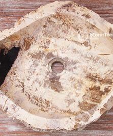 Раковина из окаменелого дерева Uncia